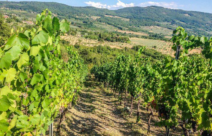 Paolo-Conterno-Toscana-Ortaglia-06-1500
