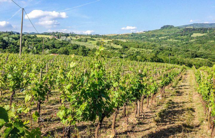 Paolo-Conterno-Toscana-Ortaglia-08-1500