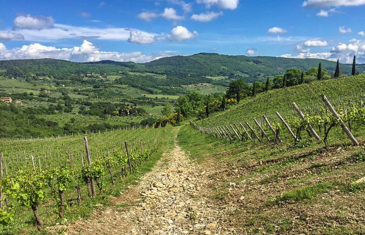 Paolo-Conterno-Toscana-Ortaglia-09-1500