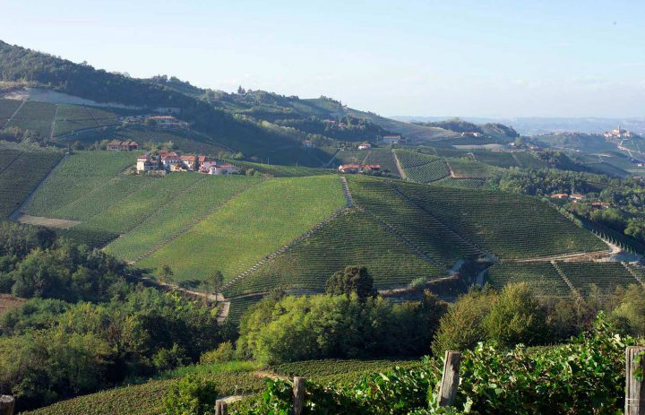 pc-piemonte-ginestra1-1500